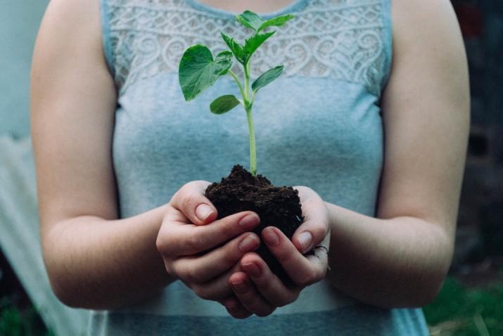 une femme tiens une pousse de plante verte